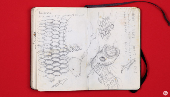Shadric Toop page of sketchbook showing designs for dragon