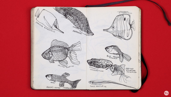 Shadric Toop page of sketchbook showing pen drawings of fish