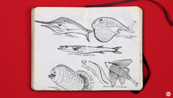 Shadric Toop page of sketchbook showing visual research on fish