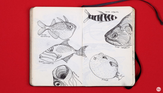Shadric Toop page of sketchbook showing ink drawings of fish