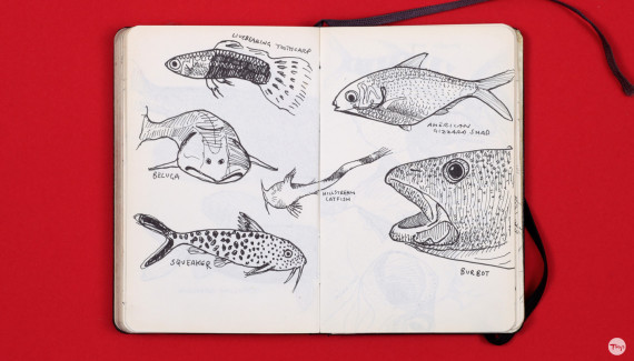 Shadric Toop page of sketchbook showing drawings of fish