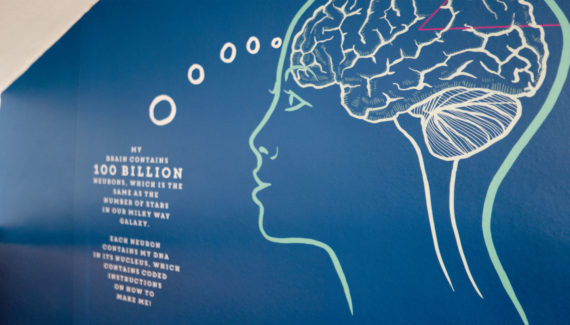 School wall graphic mural design showing the human brain