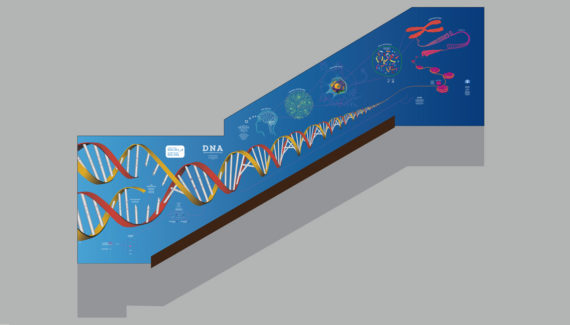 school wall graphics for science stairwells showing a dramatic 3d rendered illustration of dna on a school stairwell wall - Toop Studio