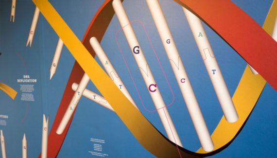 school wall graphics for science stairwells - showing dna nucleotides on stairwell wall - work by Toop Studio