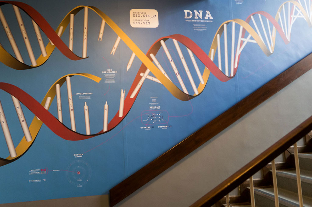 Educational school wall graphic showing DNA diagram for Denbigh High School - illustrating 'E is for Education' in A to Z of design for schools blog