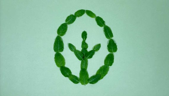 Video with Animation - Georganics - screenshot 01, frame from stop motion animation, mint leaves logo - Toop Studio