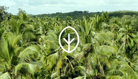 Video with Animation - Georganics - screenshot 04 Coconut plantation - Toop Studio